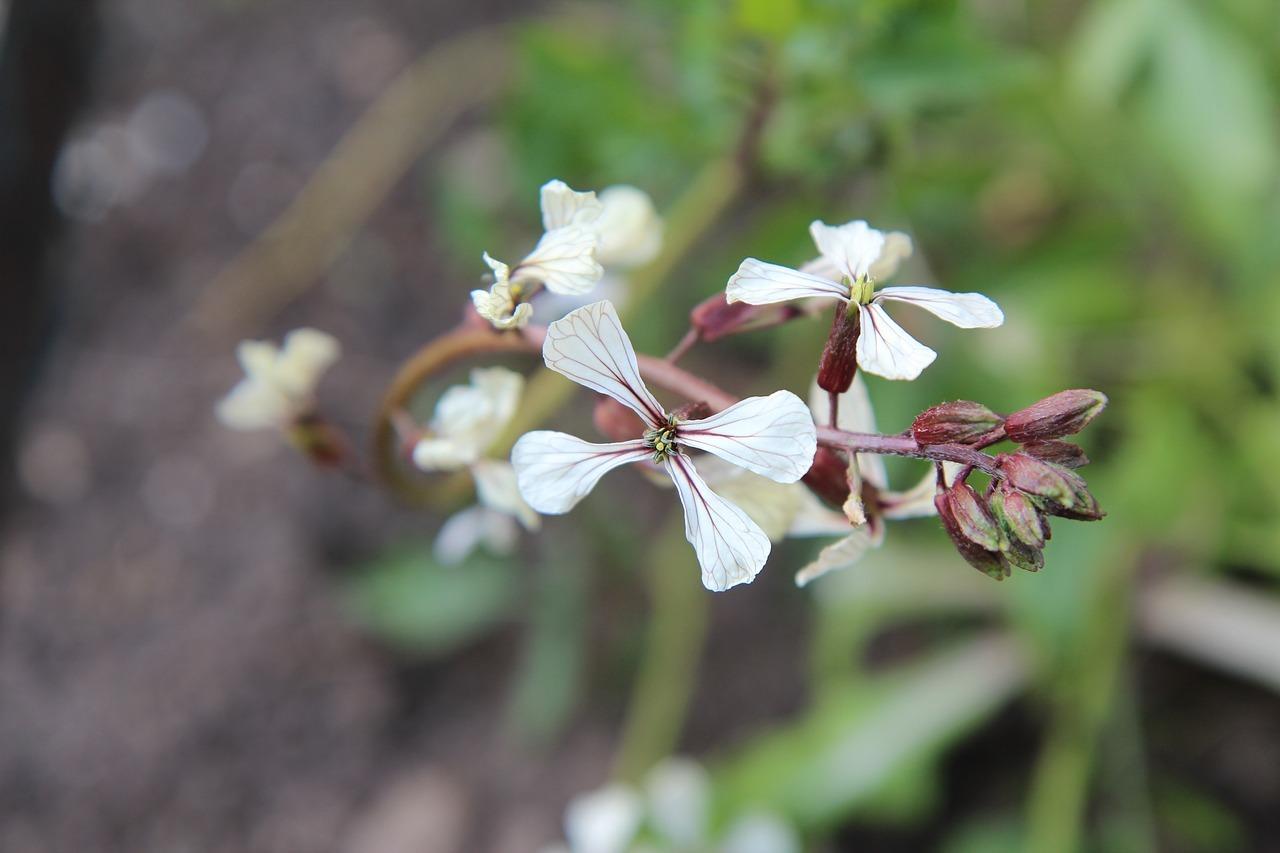 Top Rucola pflanzen: Auf dem Balkon, im Topf und im Garten - Utopia.de #AJ_16