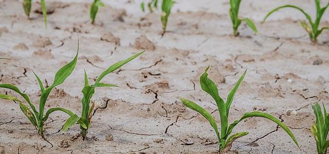 Trinkwasser knapp Hitze Dürre