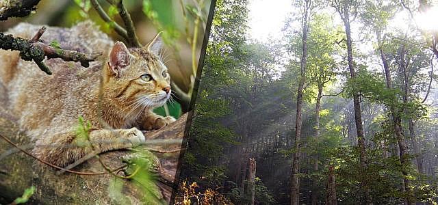 Urlaub: Urwälder in Europa