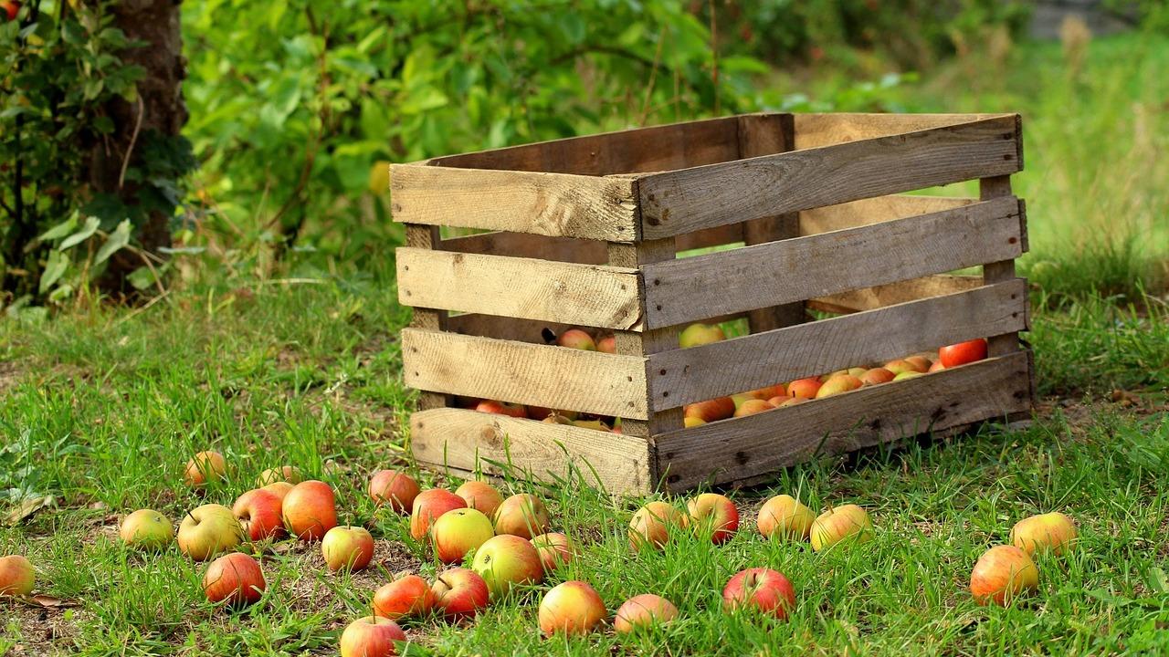 Äpfel einkochen: Mit und ohne Zucker