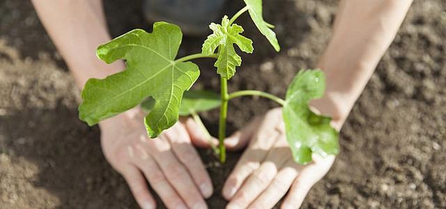 Bäume pflanzen – empfehlenswerte Baumpflanzprojekte und Organisationen zum Waldschützen