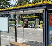 Bienen Haltestelle Gründach Utrecht