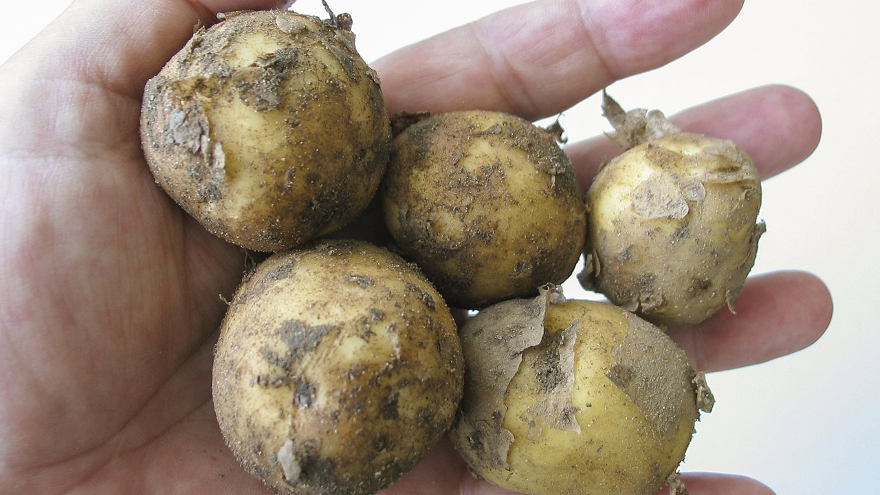 Drillinge-Kartoffel: So kochst du sie und vermeidest Lebensmittelverschwendung