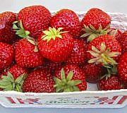 Erdbeere Schimmel