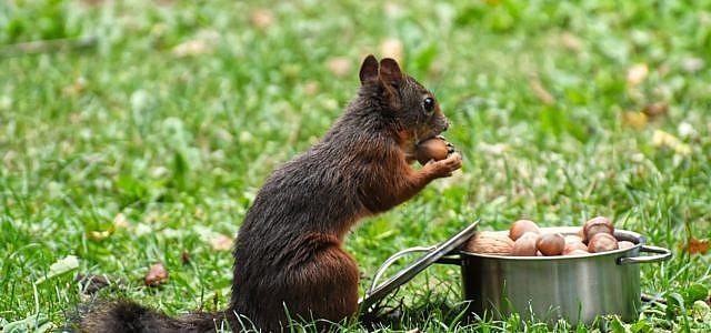 Was Essen Eichhörnchen