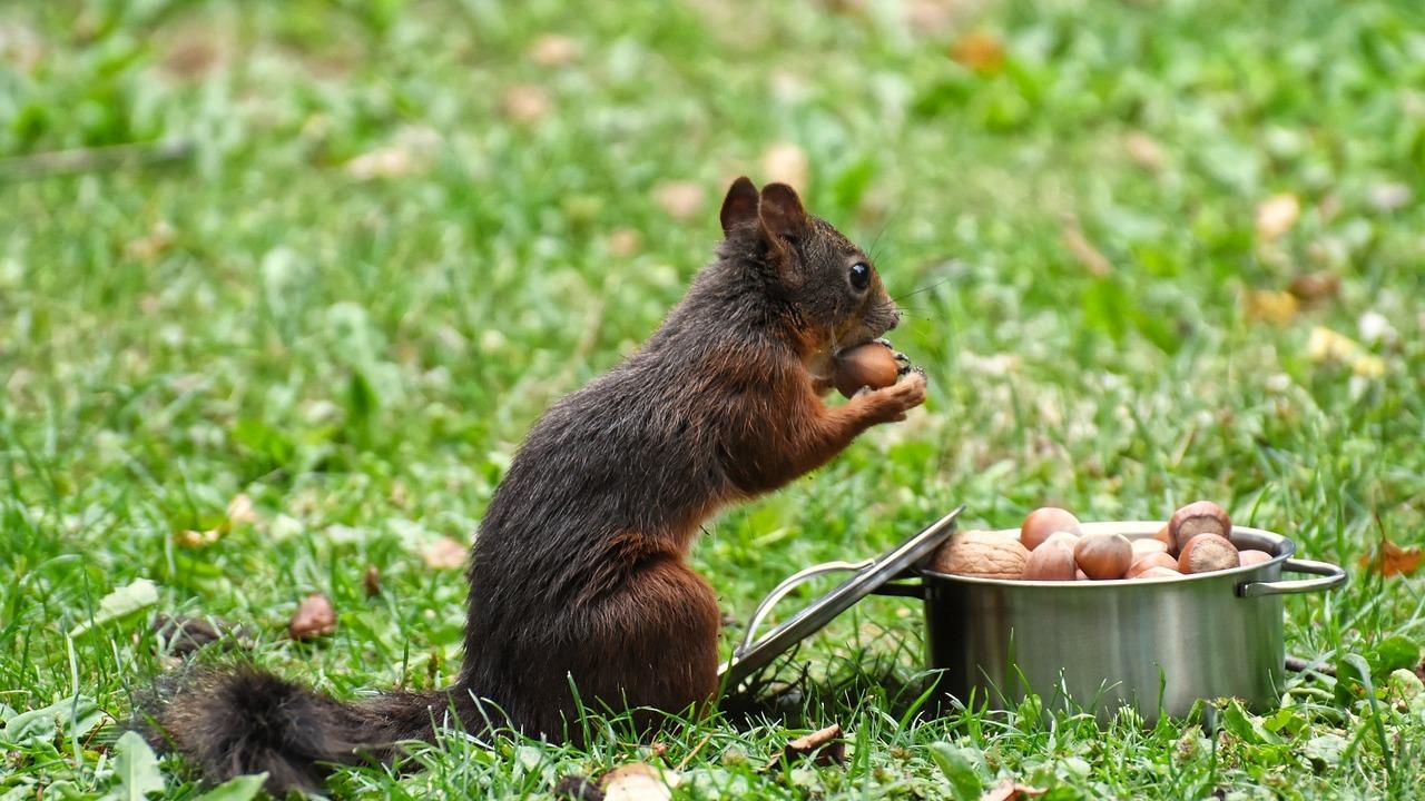 Eichhörnchen füttern: Was sie fressen und was du beachten solltest