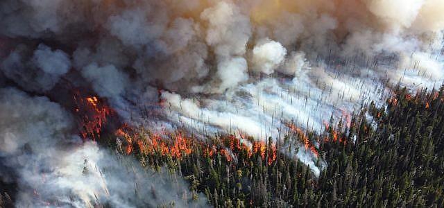 Wald, Brand, Feuer, Amazonas
