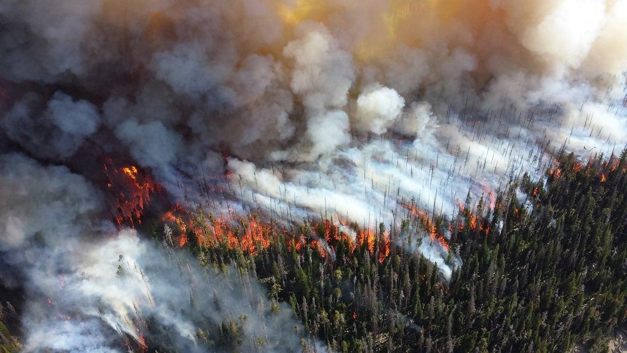 Seit Wochen brennt der größte Regenwald der Welt – und kaum jemanden interessiert es