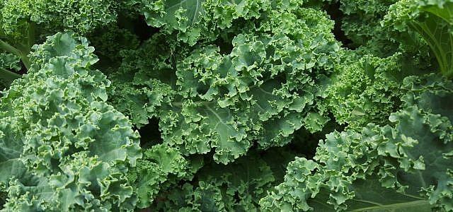 grünkohl vegetarisch