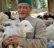 bio fair teppich wolle