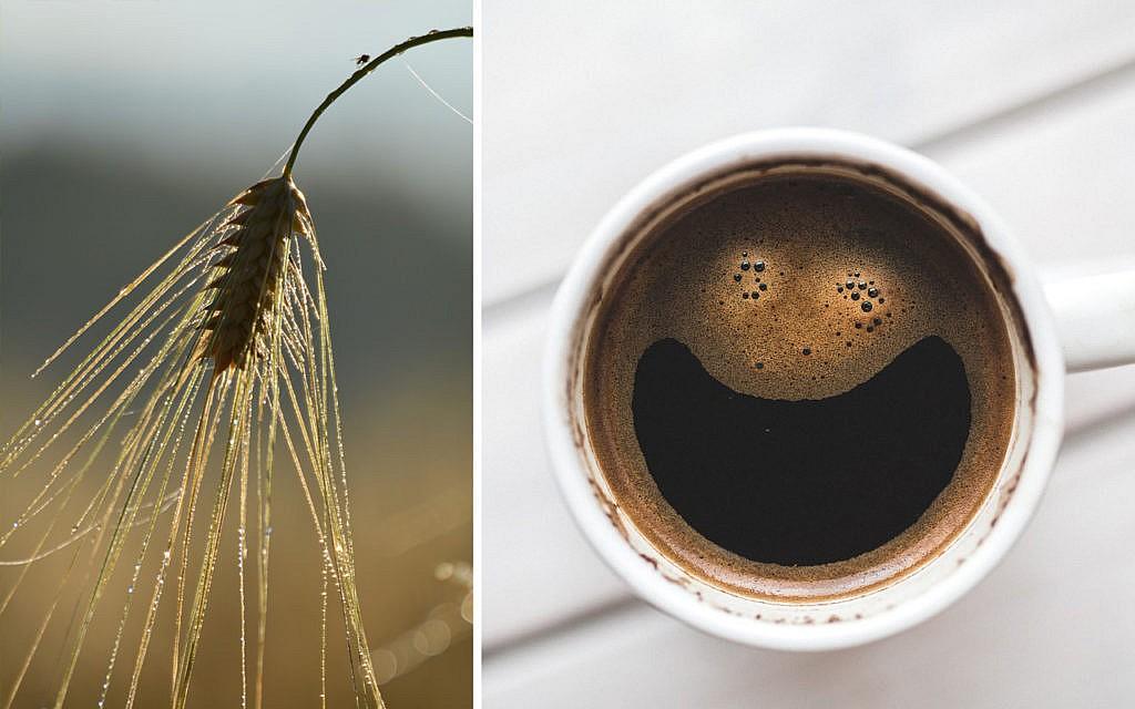 malz kaffee regionale kafeealternativen