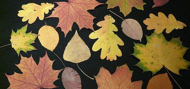 Blätter Pressen trocknen