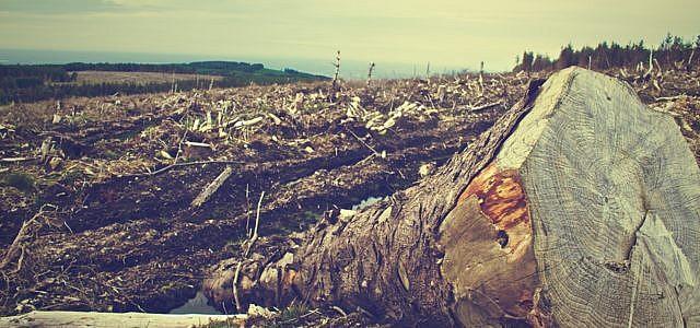 Durch Rodungen geht kostbarer Regenwald verloren.