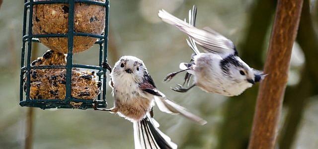 Vogelfutter selbst machen