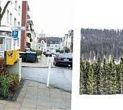 Weihnachtsbaum entsorgen Tannenbaum christbaum