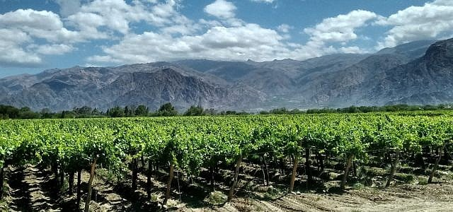 Wein, Argentinien
