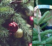 Fair-Tree-fairer-Weihnachtsbaum