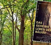 Das geheime Leben der Bäume Film