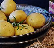 Kartoffeldiät Kartoffeln