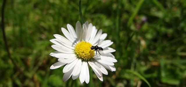 Fliegende Ameisen im Haus