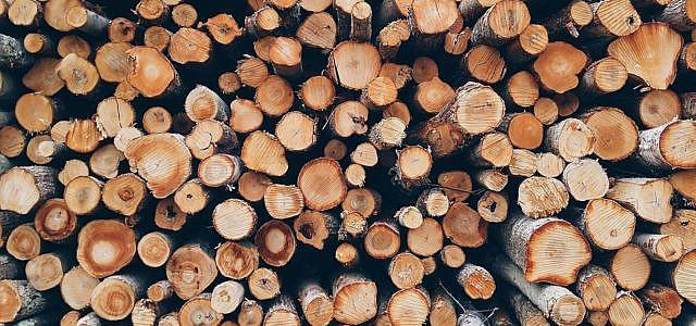 Holz entsorgen Holz