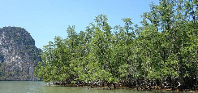 Mangroven und Mangrovenwälder