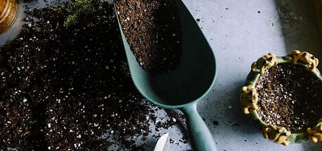 Pflanzen düngen mit natürlich Mitteln