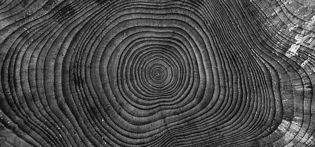 Tropenholz