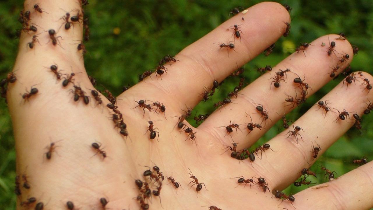 Ameisen bekämpfen: Natürliche Hausmittel für Garten und Wohnung Depot