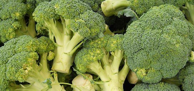 Brokkoli pflanzen