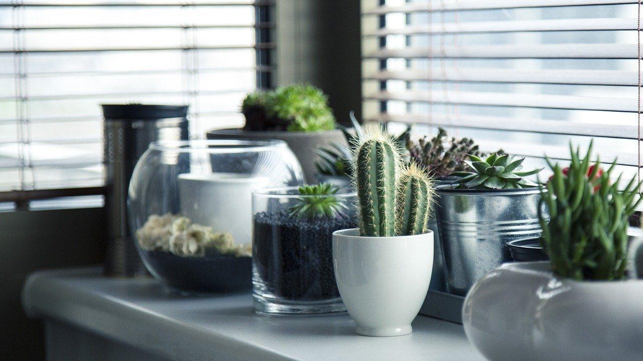 pflanzen umtopfen allgemeine anleitung und tipps