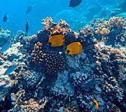 Versauerung der Meere