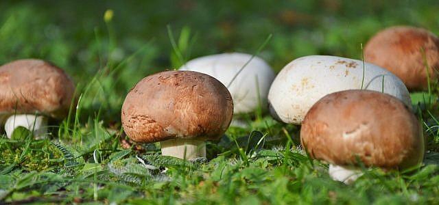 pilze züchten pilze selber züchten