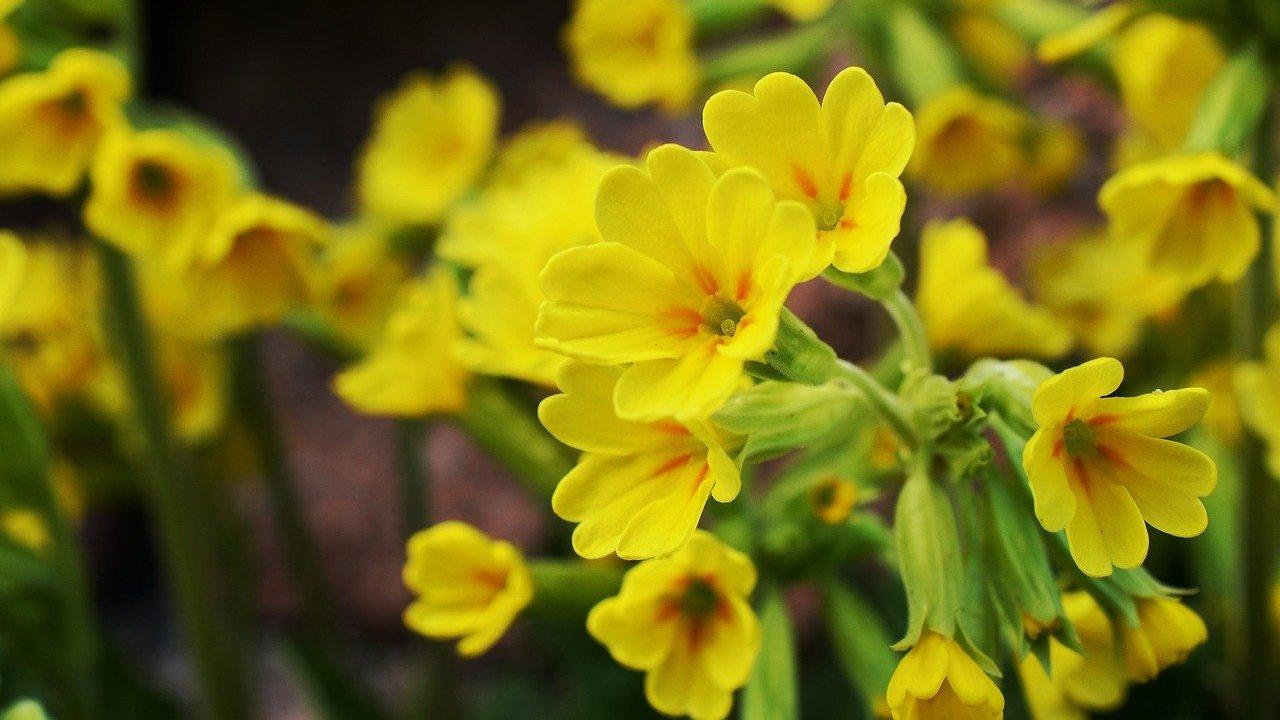 heilpflanze 10 buchstaben