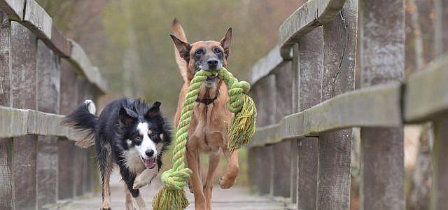 Hund adoptieren