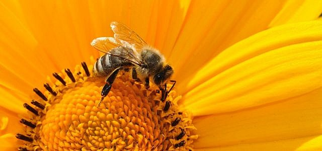 Insektenfreundliche Produkte