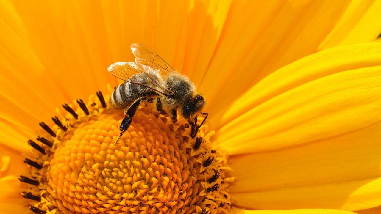 Insektenfreundliche-Produkte-So-hilfst-du-Bienen-Co-