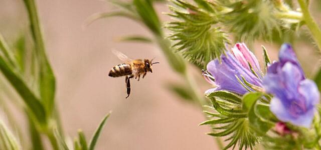 Wildbienen REWE Group