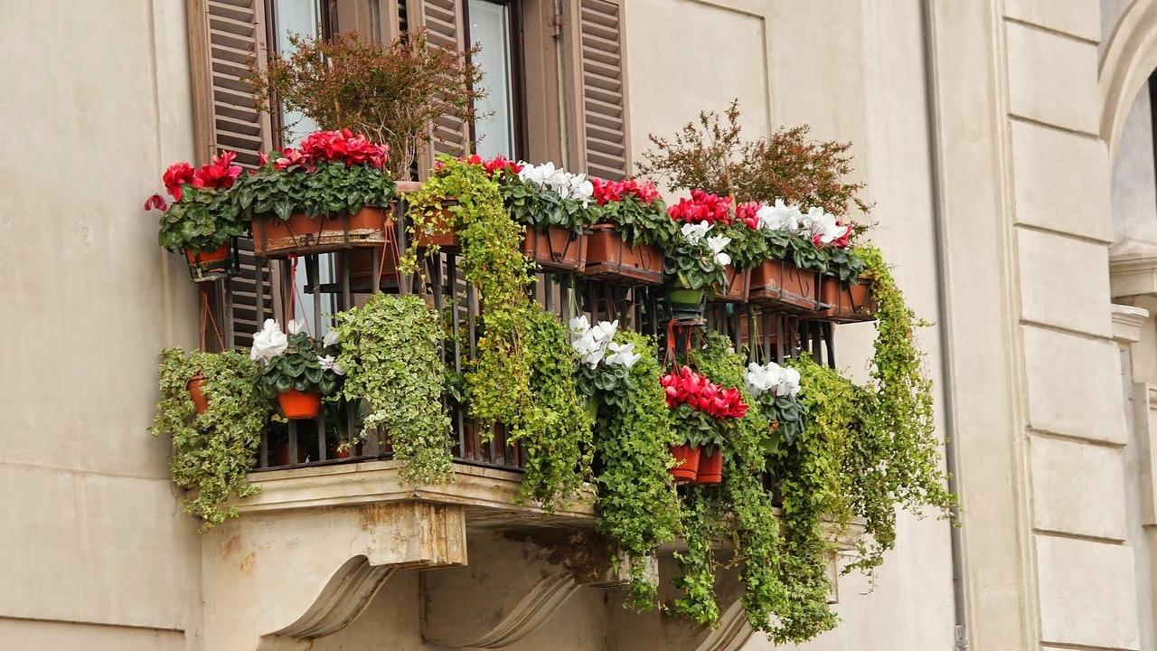 Pflanzen für pralle Sonne: Diese Pflanzen sind pflegeleicht und Bilder