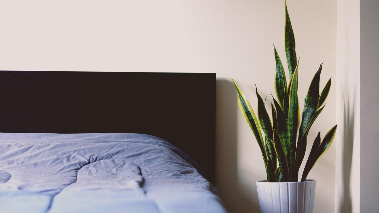 Pflanzen im Schlafzimmer: So hast du einen gesunden Schlaf - Utopia.de