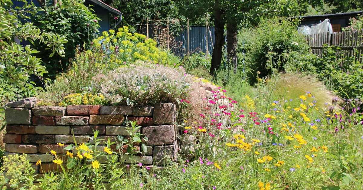 Mehr Mut zu wilden Ecken – so gestaltest du deinen Garten insektenfreundlich