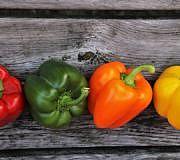 Paprika lagern