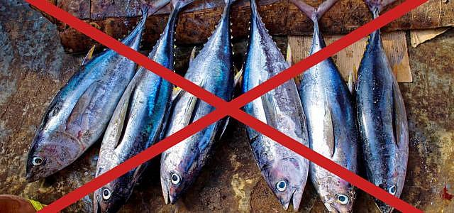 plant based fish vegan
