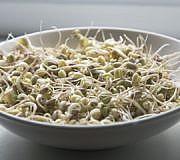 sojasprossensalat