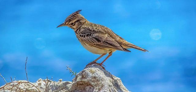 vogelschutzrichtlinie
