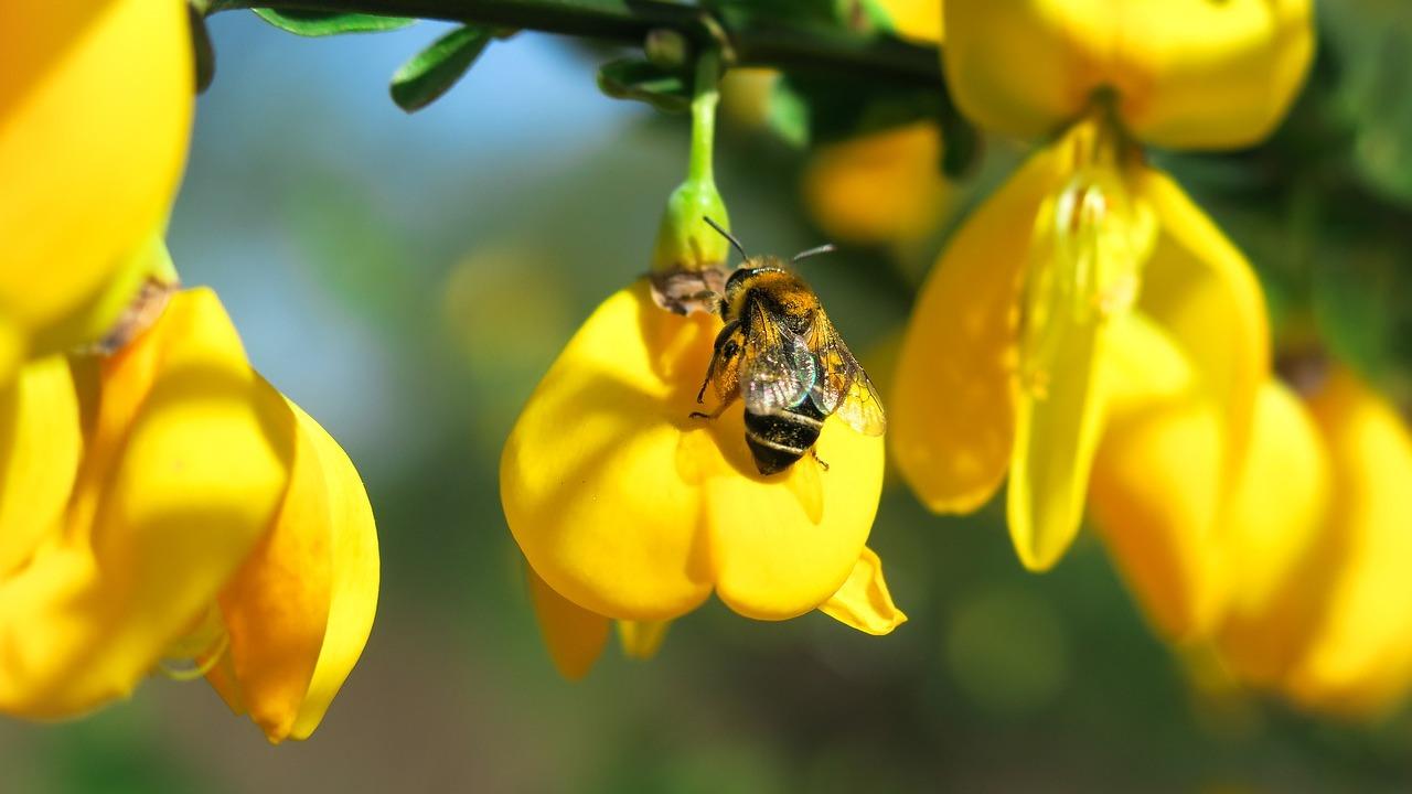 Bienenarten: Diese 5 heimischen Arten solltest du kennen