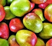 Mango lagern