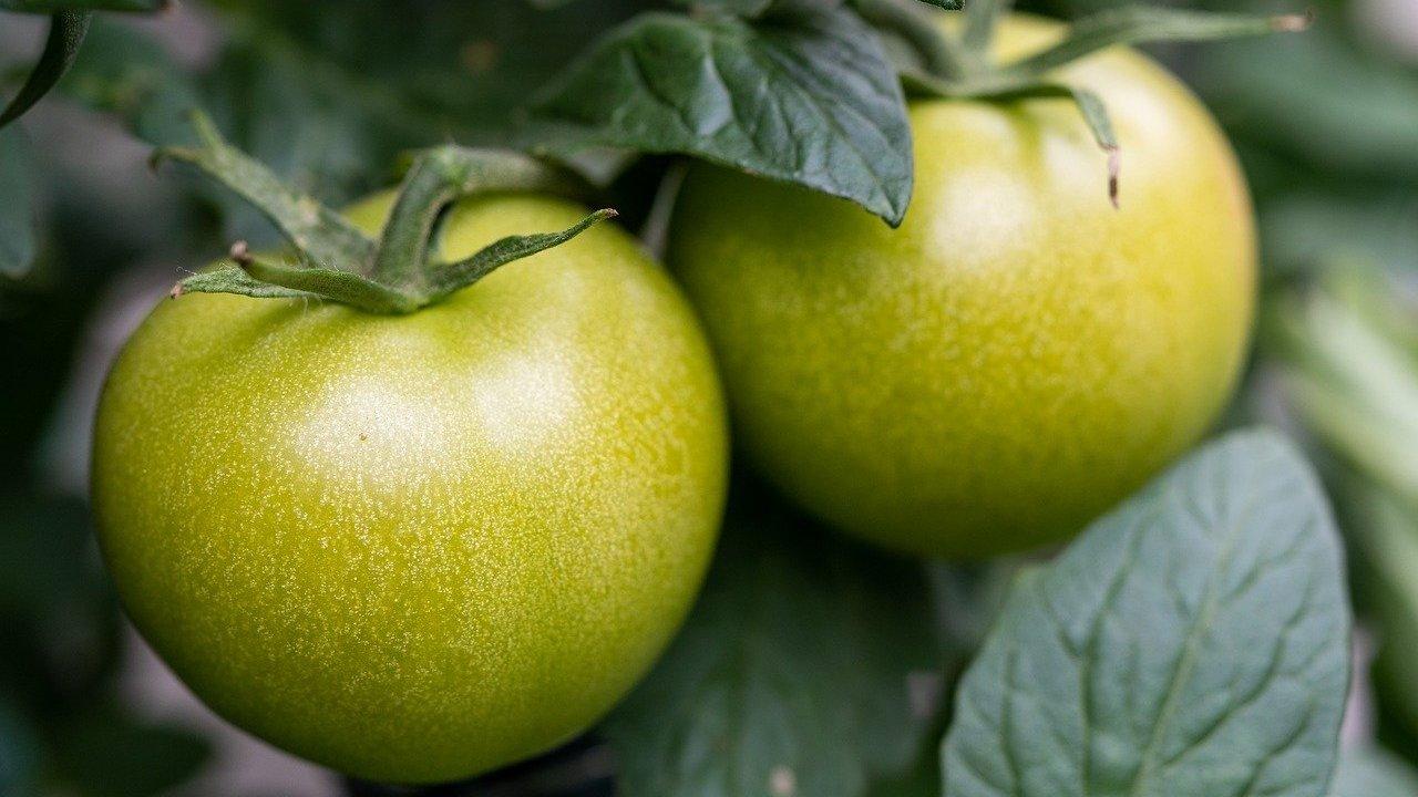 46++ Gruene tomaten essen kinder ideen