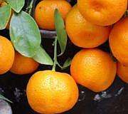 mandarine clementine unterschied