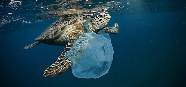 Plastikmüll im Meer: Die wahren Ursachen